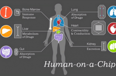 organs-on-chips-01