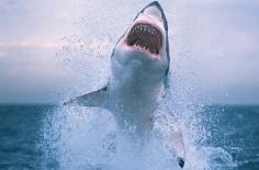 无人机鲨鱼
